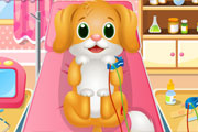 Pet Dentist Doctor